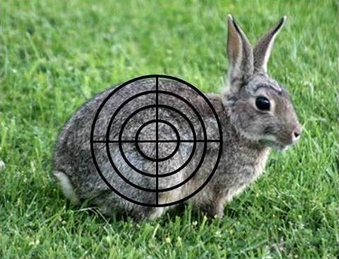 rabbit in crosshairs
